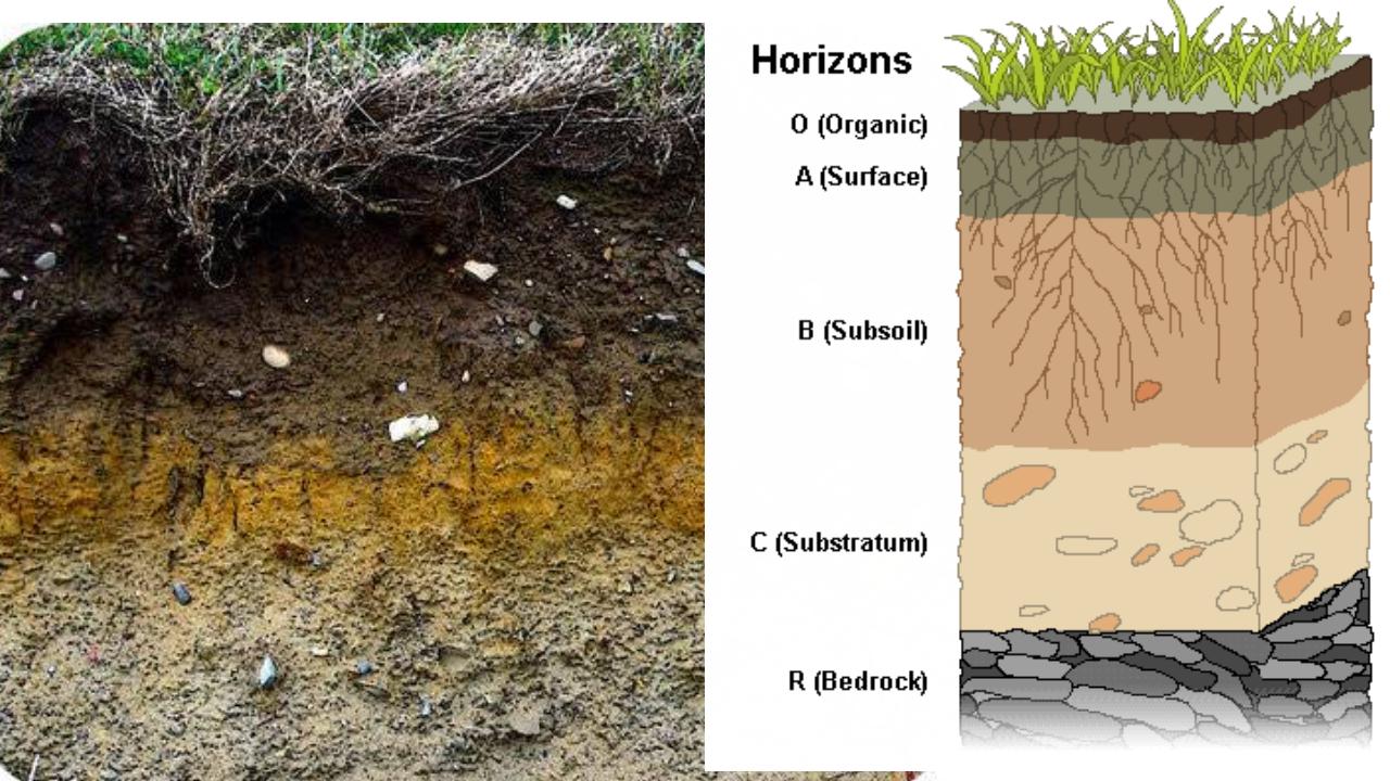 Soil Horizon  U0026 Soil Profile   Plantlet