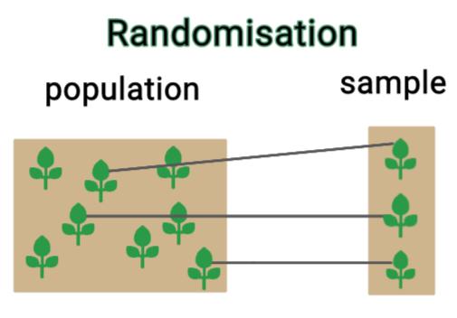 Simplified diagram of randomization showing plants are randomly picked