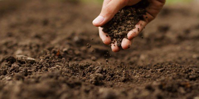 Acidic soil