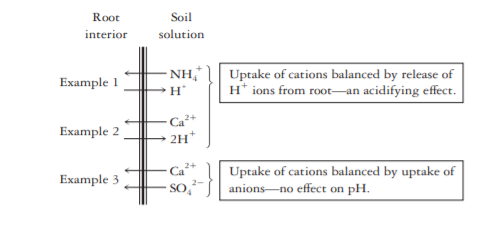 Plant uptake of cations